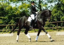 USDF Launches New Sport Horse Prospect Development Program