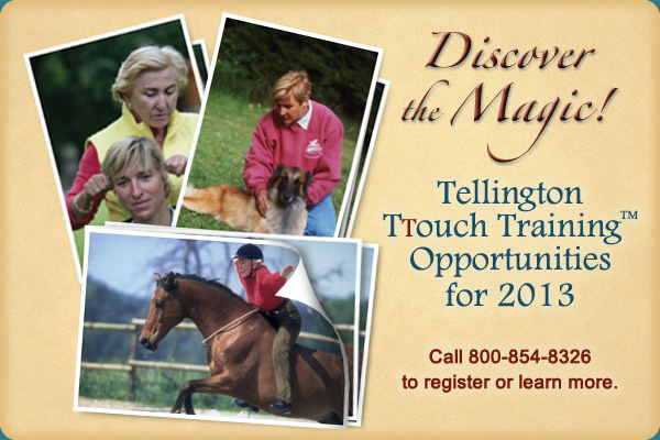 Tellington TTouch Companion Animal Training to be held in Pfluegerville – October 2013