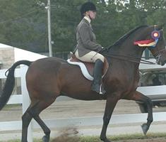 Elite Performance Horses