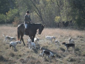 Fox Hunting at 7iL Ranch