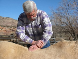 Equine Chiropractic Clinic Seminar - Red Horse Ranch, Dripping Springs