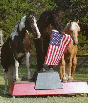 Imagine A Horse... Trick Horse Training Camp,  May 9-12 in Dripping Springs, Texas