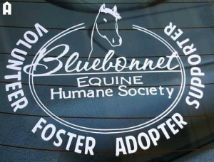 Bluebonnet Equine Humane Society Participating in ASPCA #HelpAHorse Day 2017