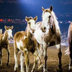 Houston Livestock Show and Rodeo 2017 Draws Record 2.6 Million Fans