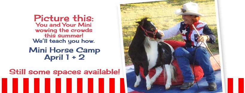 Mini Horse Trick Training Camp Austin Texas