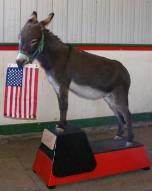 """Imagine A Horse - """"Imagine A Mini"""" Horse Trick Training Camp"""