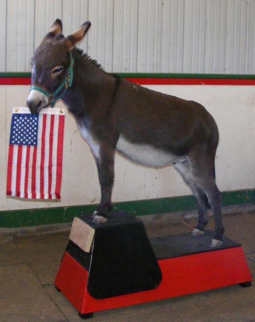 """Imagine A Horse – """"Imagine A Mini"""" Horse Trick Training Camp"""