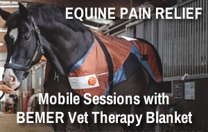 Equine Pain Relief - BEMER Vet Therapy Blanket Sessions