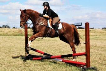 AEC Combined Test Horse Show – 2018 Spring Series #5 – Cedar Creek, TX